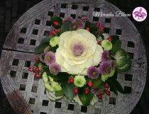 Prachtige Brassica's
